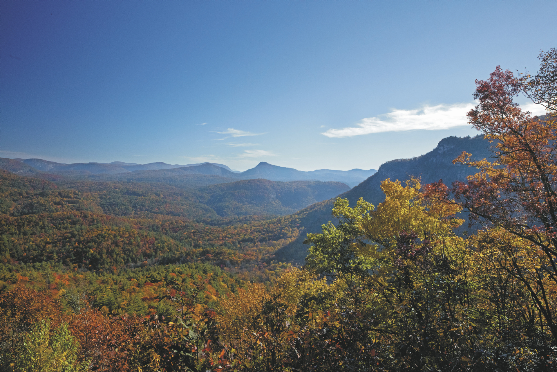 Wälder bei Orangeburg (South Carolina)