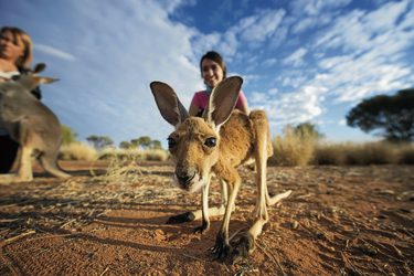 at The Kangaroo Sanctuary ©Tourism NT