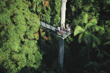 Tree Top Walk in den Tamborine Mountains