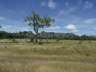Savannenlandschaft bei Chillagoe