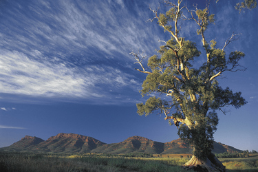 In den Flinders Ranges