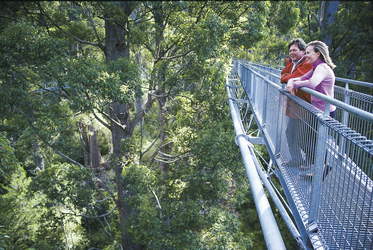 Auf dem Tree Top Walk