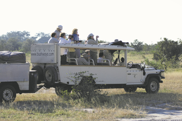 Auf Safari mit Bush Ways