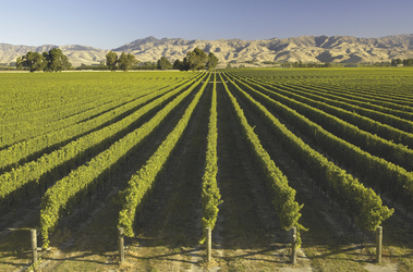 Weinberge im Marlborough