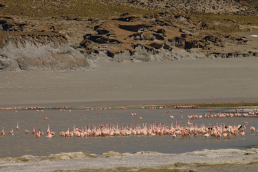 Flamingos in der Laguna Grande