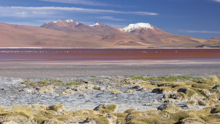 Laguna Colorado im Altiplano
