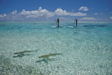 Stand up paddling ©Tahiti Tourisme
