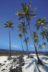 Strand in Kealakekua auf Big Island - c Tor Johnson/Hawaii Tourism