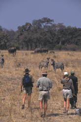 Wandersafari Nsolo und Luwi Bush Camp