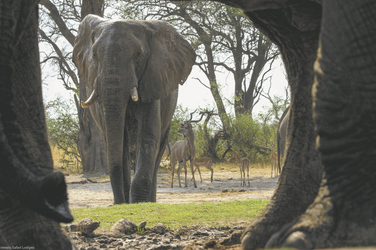 Tierbeobachtung aus dem Hide, Bomani Tented Lodge, Hwange Nationalpark