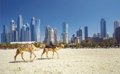 Kamele vor der Dubai Skyline