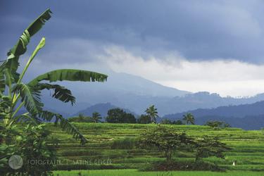 Reisfelder auf Sumatra