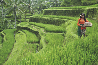 Reisfelder in Ubud, ©Ministry of Tourism, Republic of Indonesia