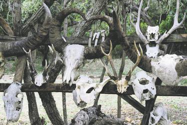 Schädelknochen auf Komodo