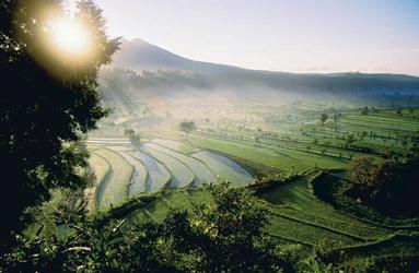 Reisfelder in Ostbali