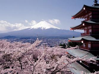 Mt. Fuji zur Kirschblüte