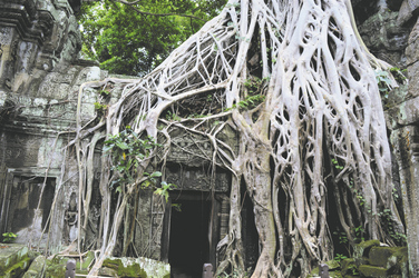 Ta Prohm  Tempel  Angkor