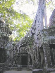 Baumwurzeln am Ta Phrom Tempel , ©Ines Höflich