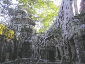 Ta Phrom Tempel in Kambodscha