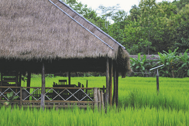 Speisen in den Reisfeldern, Kamu Lodge