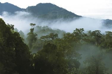 Dschungel auf Borneo