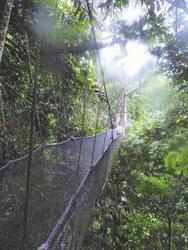 Hängebrücke durch den Regenwald von Borneo