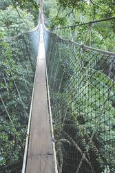 Hängebrücke in der Taman Negara