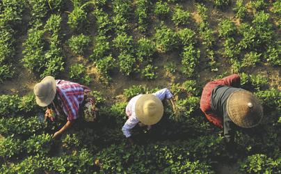 Feldanbau in Mandalay, ©Sandra Imstepf