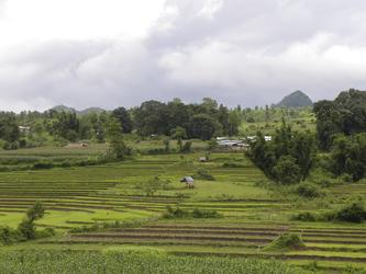 Reisfelder bei Hsipaw
