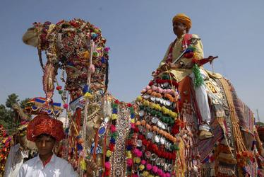 Geschmücktes Kamel mit Reiter beim Pushkar Fest