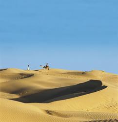 Kamel in der indischen Wüste