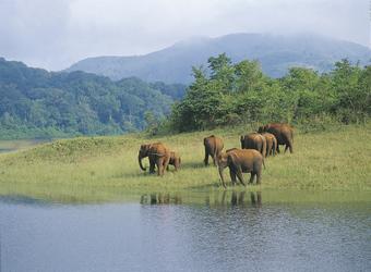 Elefanten im Periyar Nationalpark