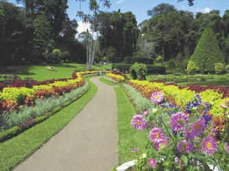 Botanischer Garten in Peradeniya