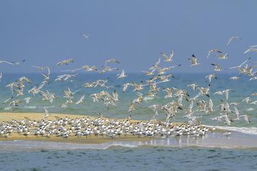 Wasservögel auf Mannar Island