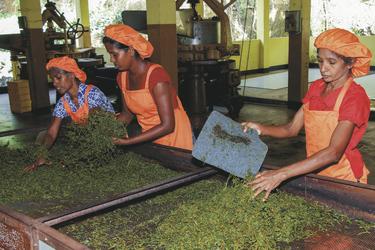 Besuch in einer Teefabrik