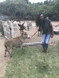 Esel Aufzuchtstation Mannar Island