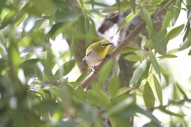 Fabelhafte Vogelwelt