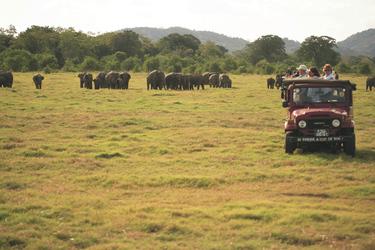 Jeep Safari im Minneriya Nationalpark