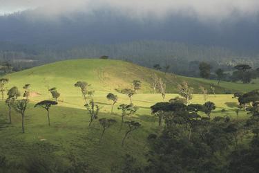 Horton Plains in der Regenzeit