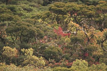 Natur im Horton Plains Nationalpark