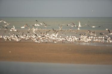 Vögel auf Manner Island