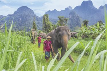 Elefanten mit ihren Mahouts im Elephant Hills Camp