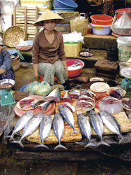 Fischmarkt, Saigon (Intrepid)