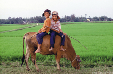 Kinder auf den Reisfeldern