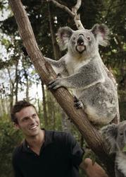 Auf Koala Tour