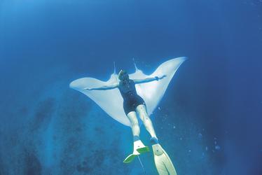 Tauchen im Ningaloo Reef