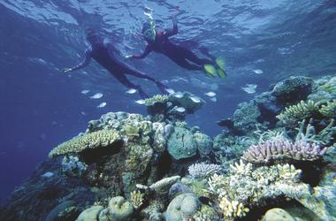 Schnorchler am Riff