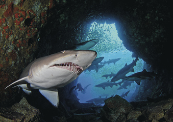 Höhlentauchgang South West Rocks ©South West Rocks Dive Centre