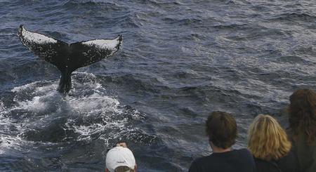 Walbeobachtung vor Sydney