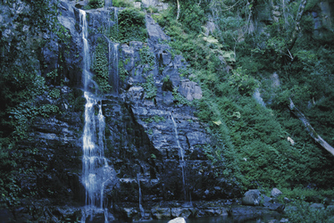 Wasserfall im Minnamurra Nationalpark
